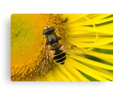 Bee, sitting in the sun Canvas Print
