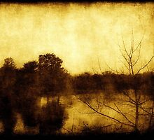 As Color Fades ©  by Dawn M. Becker