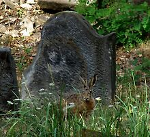 Jewish cemetery - Libochovice XII. In the emblem hare, fight not over by Natas