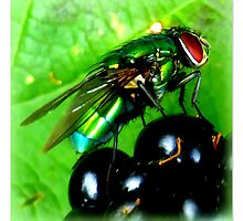 Green Fly on Blackberry by ©The Creative  Minds