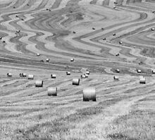 hay cutting patterns, Monticchiello, Tuscany, Italy by Andrew Jones