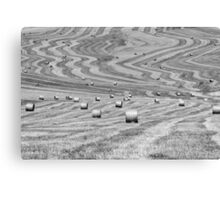 hay cutting patterns, Monticchiello, Tuscany, Italy Canvas Print