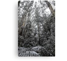 Forest of White Canvas Print