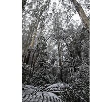 Forest of White Photographic Print