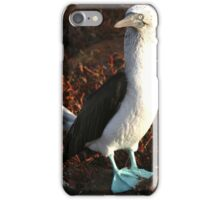 Blue Footed Booby iPhone Case/Skin