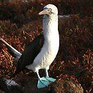 Darwinian Evolution, Galapagos by Jane McDougall