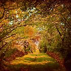 Autumn Lane by Linda Miller Gesualdo