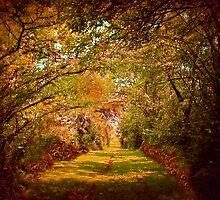 Autumn Lane by Linda Miller Gesualdo