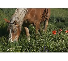 Don't eat the flowers! Photographic Print