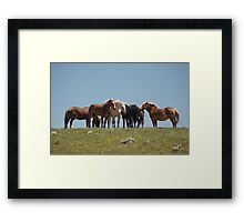 Gathering on the hill Framed Print