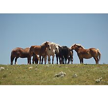 Gathering on the hill Photographic Print