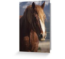 Tatanka Spirit looks on Greeting Card