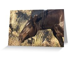 Praire Grass Greeting Card
