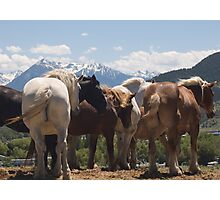 Manes & Tails Photographic Print