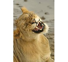 Simba smile Photographic Print