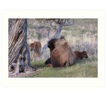 Where the buffalo roam... Art Print