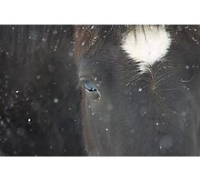 Fresh Snow Photographic Print