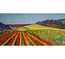 Peninsula Vineyard - Sold Photographic Print