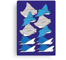 sting rays Canvas Print