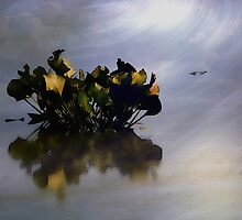 Survival by Judi Taylor