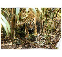 Crouching Tiger - Hidden Cub Poster