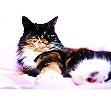 Feline Fabulous Photographic Print