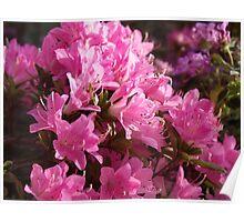 Springtime Pink Poster