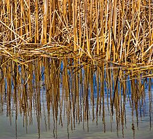 Reeds Of Christie by sundawg7