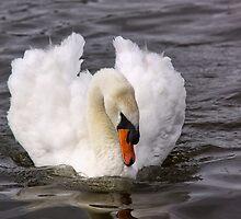 Elegant by Lynne Morris