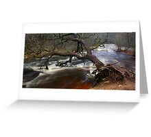 Fallen tree trunk Greeting Card