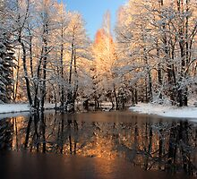 Reflection trees with sunlight by Romeo Koitmäe
