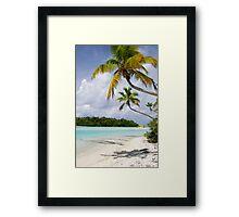 Cook Islands Palm - Aitutaki Framed Print