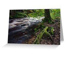 Tree roots in forest Greeting Card