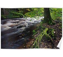 Tree roots in forest Poster