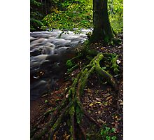 Tree roots Photographic Print