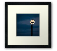 Moon stork Framed Print