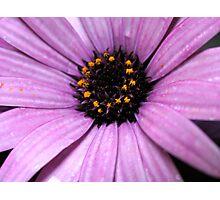 Daisy power  Photographic Print