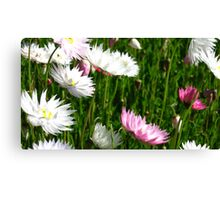 Spring Fun Canvas Print