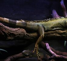 Flat out like a Lizard by Lisa  Kenny
