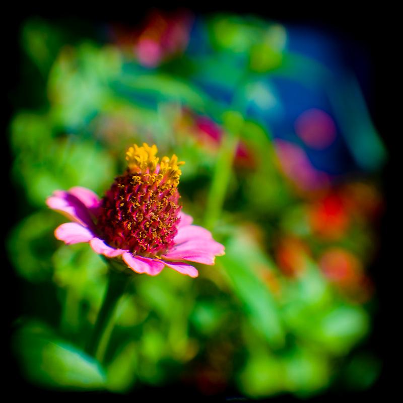 TTV by ClickChick