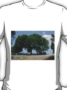 Oak tree, San Quirico d'Orcia, Tuscany T-Shirt
