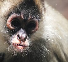 Monkey  by 8DreamTowns