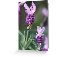 Bee Lavender Greeting Card