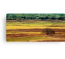 The Colours of the Land Canvas Print