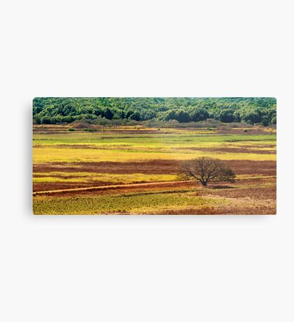The Colours of the Land Metal Print