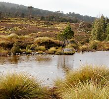 Little Alpine Tarn, Cradle Mountain,Tasmania, Australia. by kaysharp