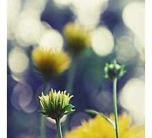 Bokeh Impressions in Yellow and Blue Photographic Print
