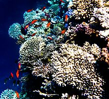 Red Sea 431 by Martin  Lidyard