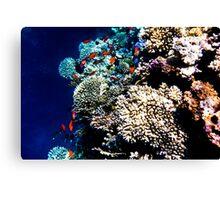Red Sea 431 Canvas Print