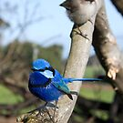 """The """"Blue"""" Couple by inAWE"""